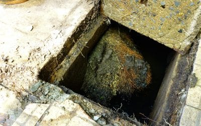 Preventing Tree Roots from Impacting Your Main Sewer Line