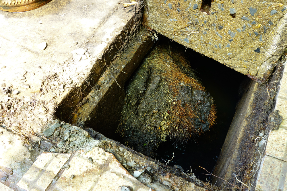 preventing tree roots sewer line